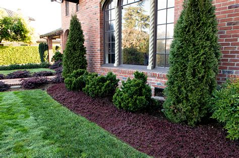 trees to plant to house foundation evergreen plants form and foliage