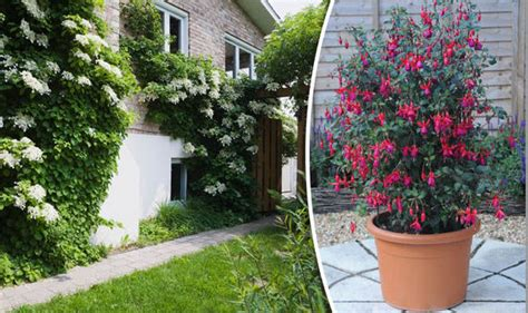 Get Creative With Climbing Plants And Add New Heights To