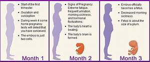 Learn About The Changes During The Course Of Your Pregnancy