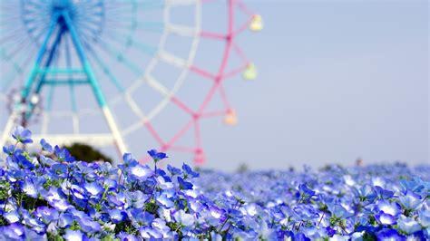 Summer Desktop Backgrounds Hd Flowers Tumblr Wallpaper