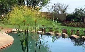 baignades naturelles tout savoir grace a nos experts With type d isolation maison 8 piscine paysagee maison amp travaux