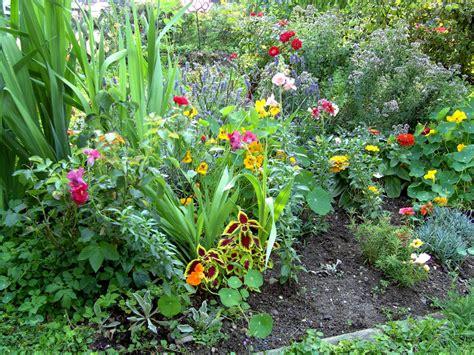 Garten Pflanzen Im Juli by Blumen Ratgeber Tipps Haus Heimwerker De