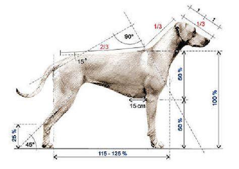 breed standard  rhodesian ridgeback assn