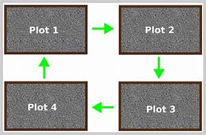 A Beginner U0026 39 S Guide To Crop Rotation  How It Works And Why