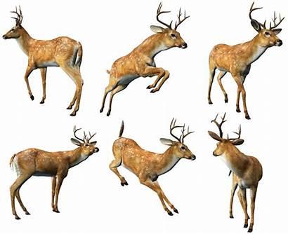 Clipart Deers Animaux Animals Clip Deer Animal