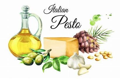 Pesto Italian Watercolor Illustration Ingredients Designer Follow