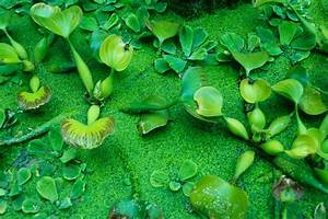 Green Water Plants Free Stock Photo - Public Domain Pictures