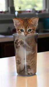 1000+ images about Cats Stuck or Stuffed into something on ...