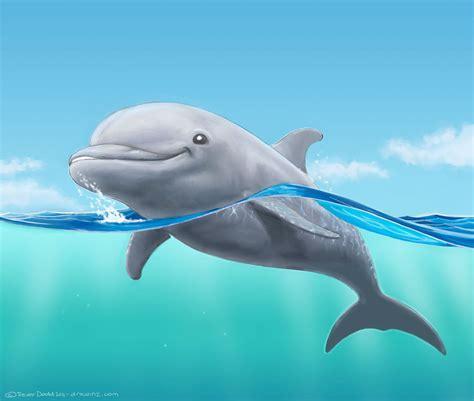 drawing   dolphin drawinz aquatic ideas