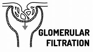 glomerular filtration made easy youtube With filtration
