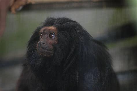 encyclopaedia  babies  beautiful wild animals animal news