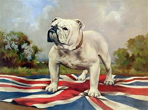 British Bulldog by English School