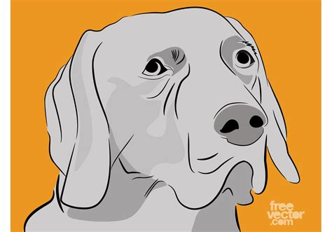 Labrador Free Vector Art