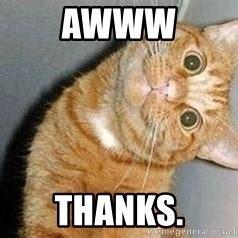 Aww Thank You Meme - aww thanks cat head tilt meme generator