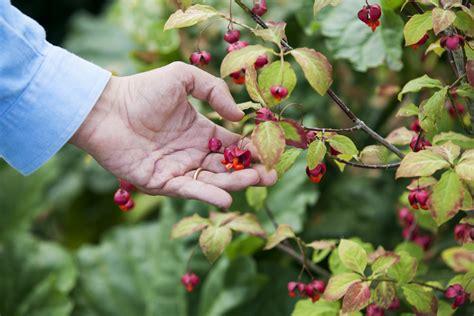 Il Giardino D'autunno Livingcorriere