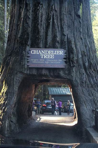 Oregon Tree Drive Thru Park California Waiting