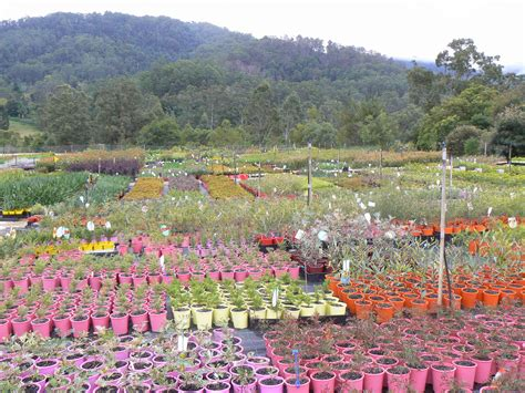 tree nurseries gondwana wholesale native plant nursery australia