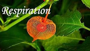 Hindi  The Biochemistry Of Cellular Respiration In Plants