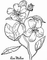 Printable Coloring Roses Adult Fairy Graphics sketch template