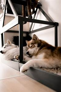 Hundehaus Für Die Wohnung : so einfach kann man sich eine moderne hundeh tte f r die wohnung selber bauen midoggy ~ Buech-reservation.com Haus und Dekorationen