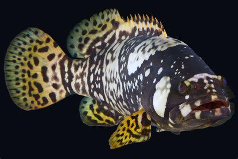 queensland grouper aquarium pacific australia fish animals reef animal waters warm nationalaquarium sharks updates october australian deep spiny turtles sea