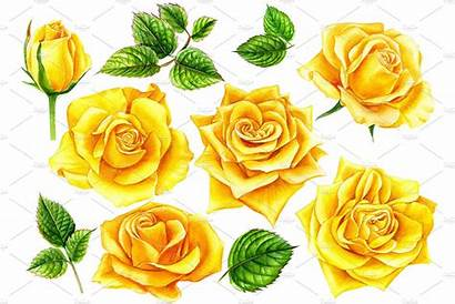 Yellow Bouquet Flowers Rose Drawing Flower Roses