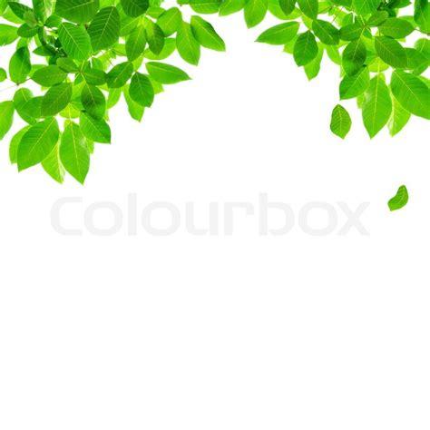 green leaf border design  white background stock photo