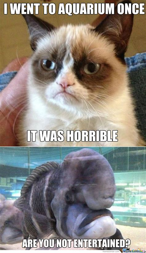Grumpy Cat Meets Grumpy Fish By Ben  Meme Center