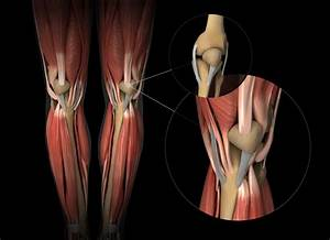 Tendons And Ligaments  How Do They Change With Age