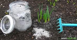 Asche Gut Für Pflanzen : holzasche als vielseitiges hausmittel verwenden ~ Markanthonyermac.com Haus und Dekorationen