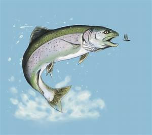 How to draw rainbow trout