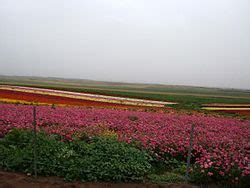 agriculture  israel wikipedia