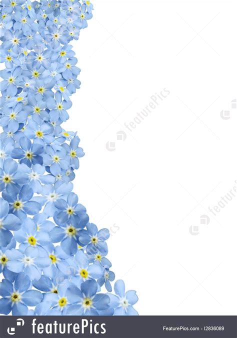 picture  forgetmenot border