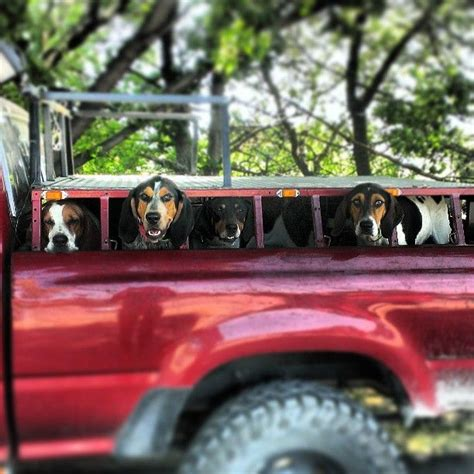 dog hunting truck hunting coon hounds coonhounds other hounds