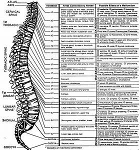 Chiropractic  The Manual Approach