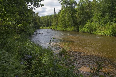 Boreal Forests Of Canada Boreal Forest Biomes Scenery