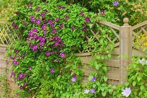 Nombres De Plantas Trepadoras De Las Plantas Enredaderas O Trepadoras Nombres De Plantas