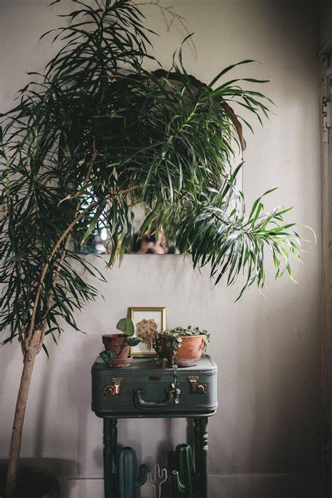 Le piante pendenti da interno sono molto decorative. Piante Pendenti Da Interno Poca Luce / 6 piante d ...