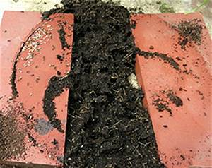 Ameisen Bekämpfen Im Garten : ameisen bek mpfen was hilft gegen ameisen in haus und garten philognosie ~ Frokenaadalensverden.com Haus und Dekorationen