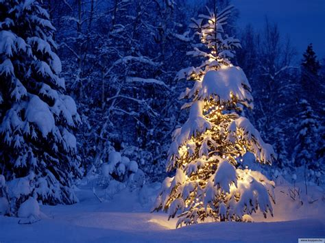 merry christmas christmas wallpaper 9427475 fanpop