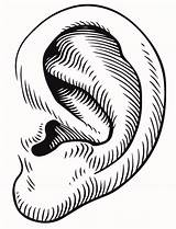 Ear Clipart Ears Clip Eye Drawing Cliparts Right Mouse Listening Mickey Library Cliparting Gclipart Clipartpost Hand Clipartbest Load sketch template