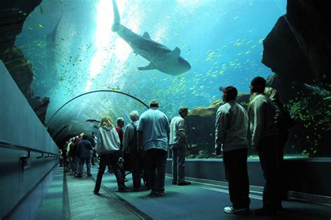 the world s largest aquarium 25 pics 171 twistedsifter