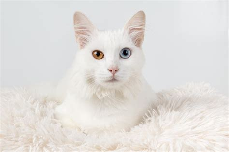 can cats see color or black and white why do some cats different colored