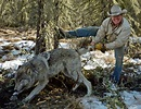 British Columbia Grizzly Hunting Photos - North River ...