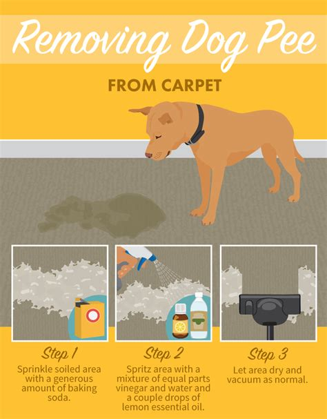 How To Remove Urine Stains From Upholstery by Stain Removal For Clothes And Household Surfaces Fix
