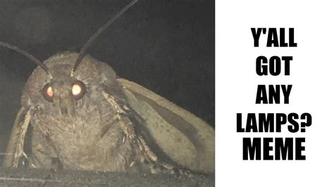 Y'all Got Any Lamps? (moth Lamp Meme)