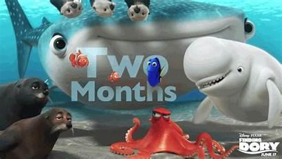 Dory Pixar Disney Finding Whale Shark Octopus