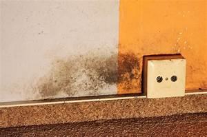 Schimmel An Kleidung Im Schrank : schimmel in der wohnung mein erfahrungsbericht majas pflanzenblog ~ Buech-reservation.com Haus und Dekorationen
