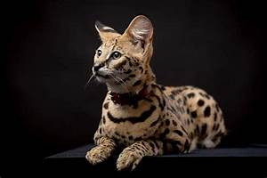 Rare Exotic Animals