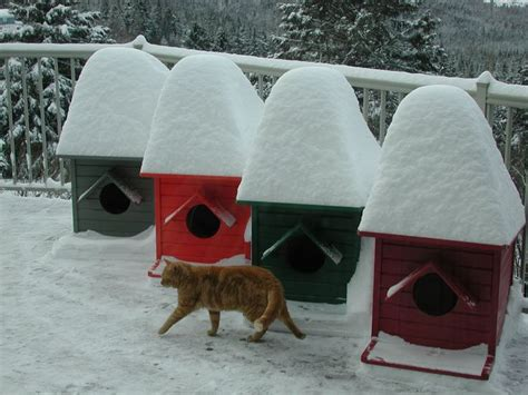 cabane pour chat 140 best images about cabanes de jardin on chalets article html and search